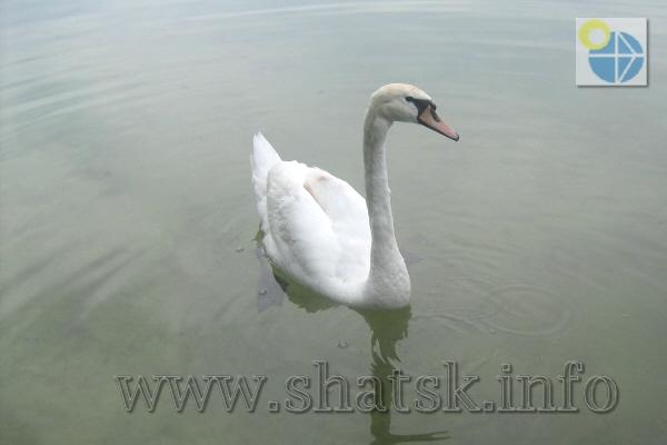 Фото шацькі озера